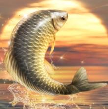 Big Fish King71217 00